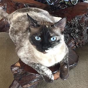 Pinot-cat