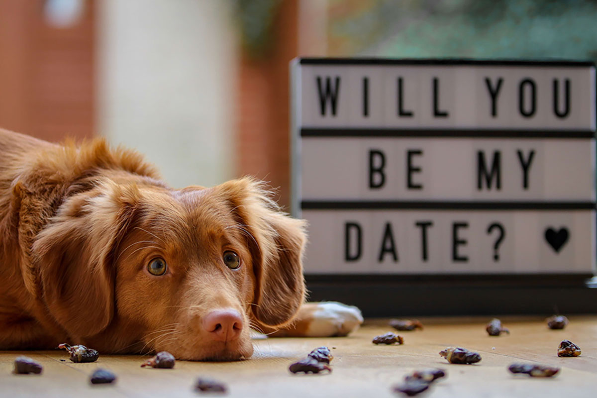 Dog sitting Will you be my date sign